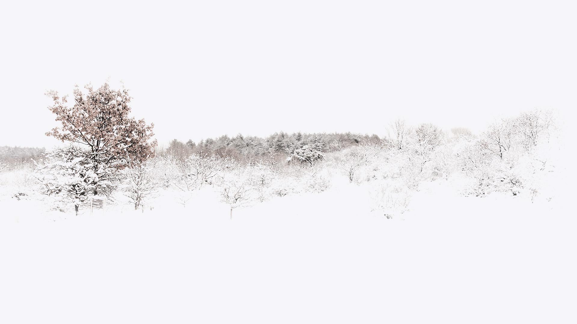 olimara-home-pasarela-larios-2016-oi-v3